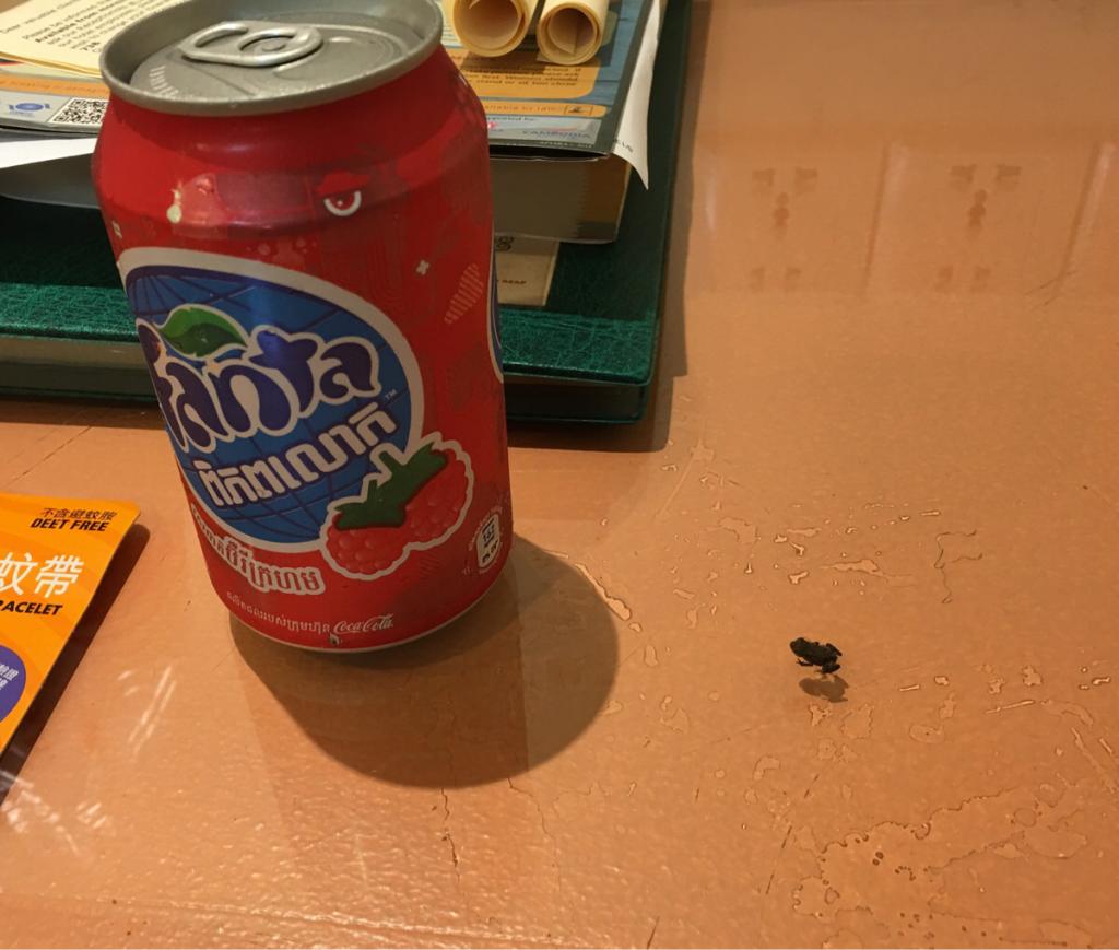 子連れでアンコール・ワット〜(8)カエルやヤモリを捕まえたかったら、「虫取り網」と「虫かご」を日本から持参した方が良いです