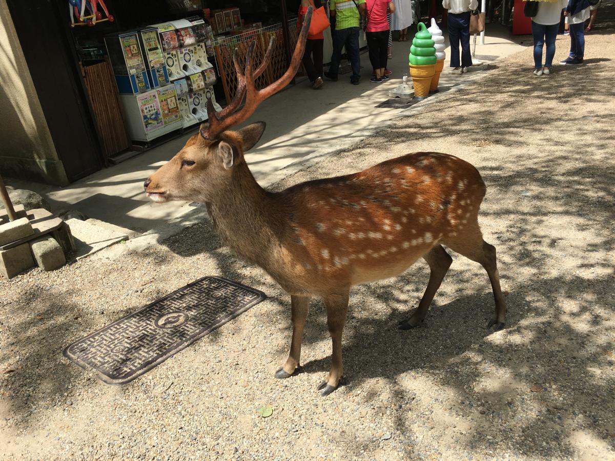 子連れで奈良旅行~(5)鹿で始まって「しかまろくん」で終わった奈良旅行