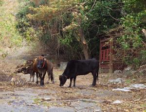 青銅器時代の遺跡「石壁石刻(Shek Pik Rock Carving)」は牛で守られていた!?~香港歴史散歩@石壁