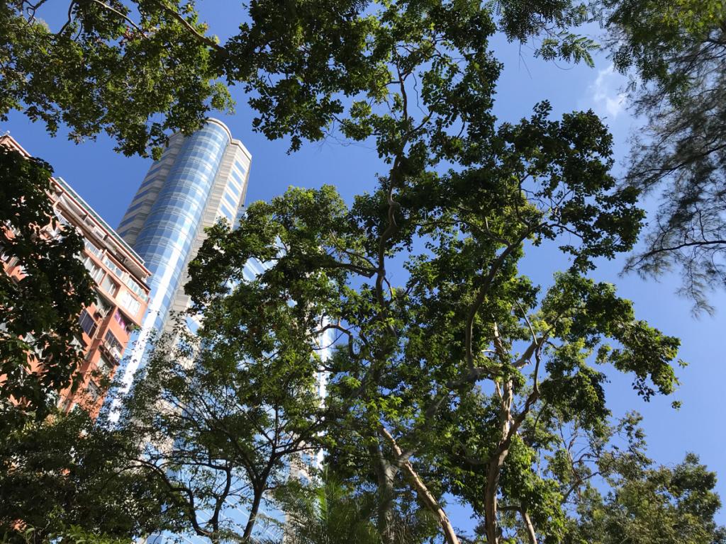 香港とは思えないくらい真っ青な空だった月曜日の朝