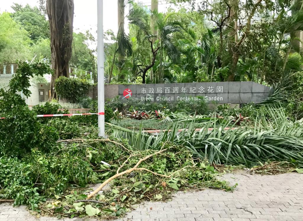 台風22号(Mangkhut)が通り過ぎた尖沙咀の「市政局百週年紀念花園」は、沢山の木がなぎ倒されて予想以上にひどい状態だった