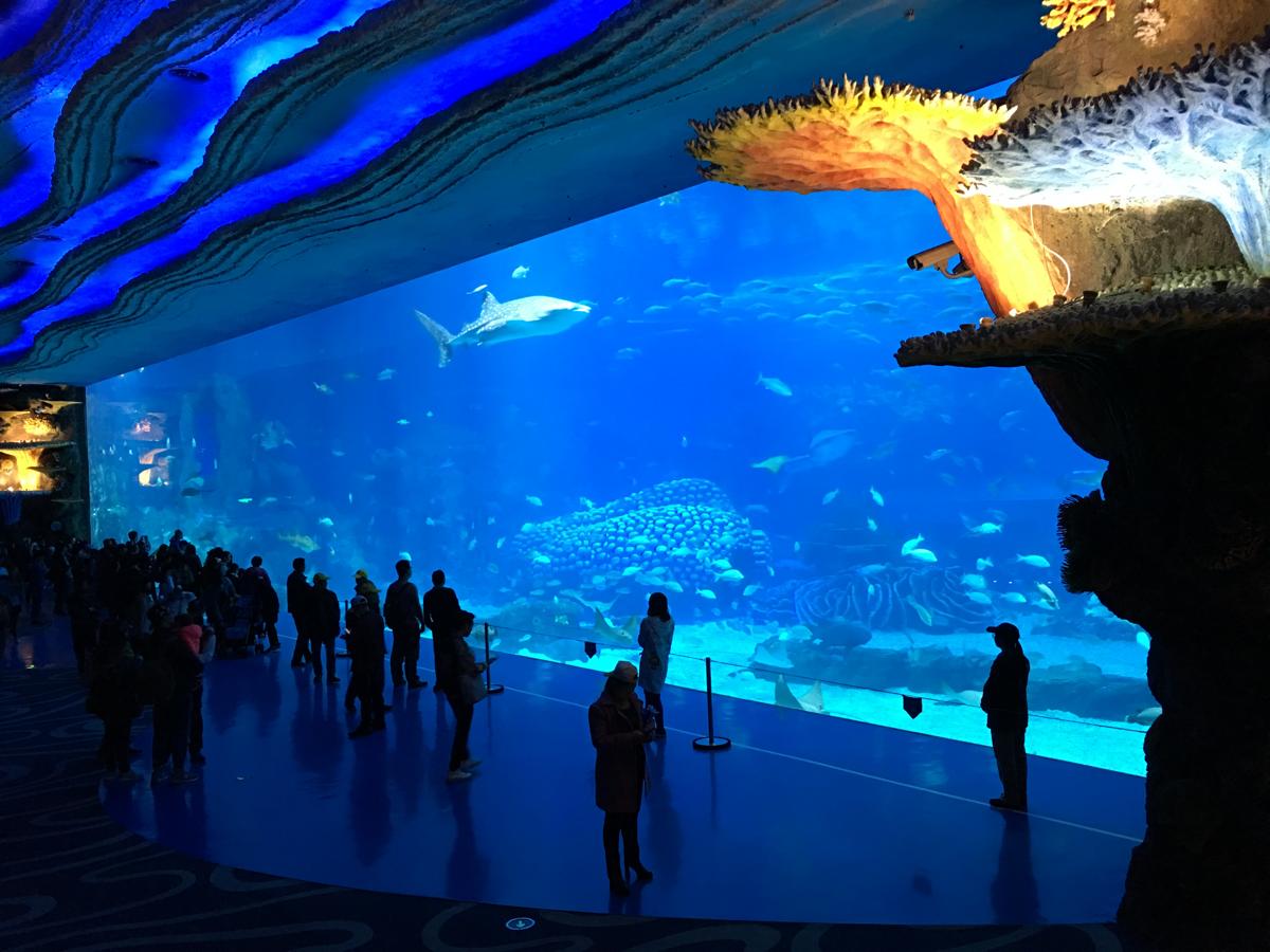 長隆海洋王国は水族館がメインのテーマパークです 〜マカオから中国の水族館に日帰り旅行 / 長隆海洋王国@珠海横琴島(3)