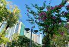 香港のデモ隊と機動隊の衝突翌日の市政局百週年紀念花園@尖東が無残な状態になっていた