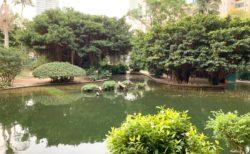 九龍公園のフラミンゴが一羽もいなくなって、池の水が全部抜かれていた