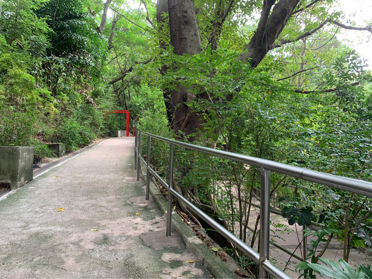 仕事を辞めても九龍公園のお散歩は続けています